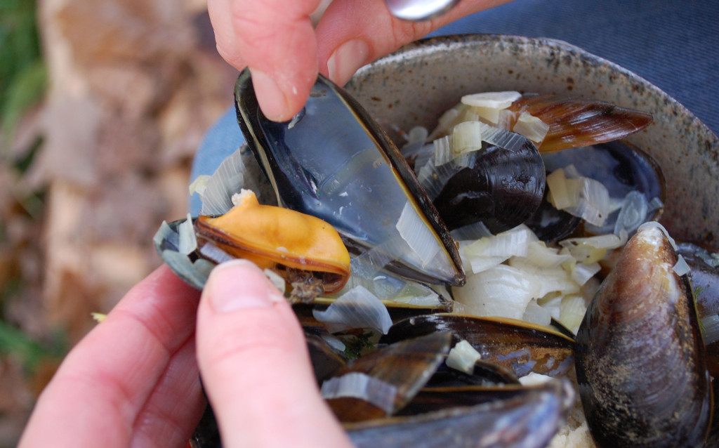 One_mussel